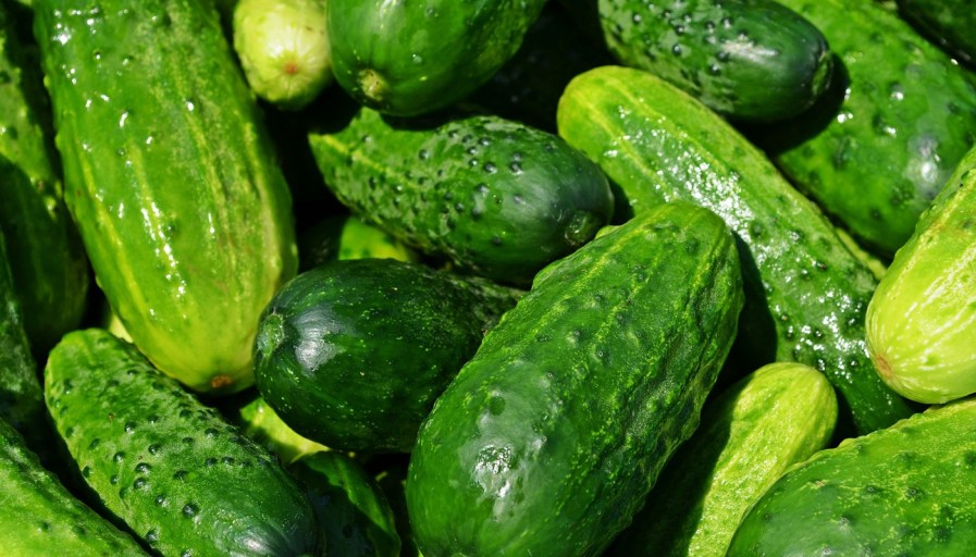 a pile of picked cucumbers