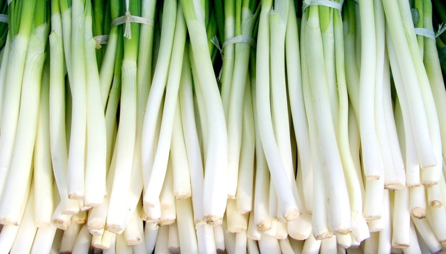 stacks of green onions tied up