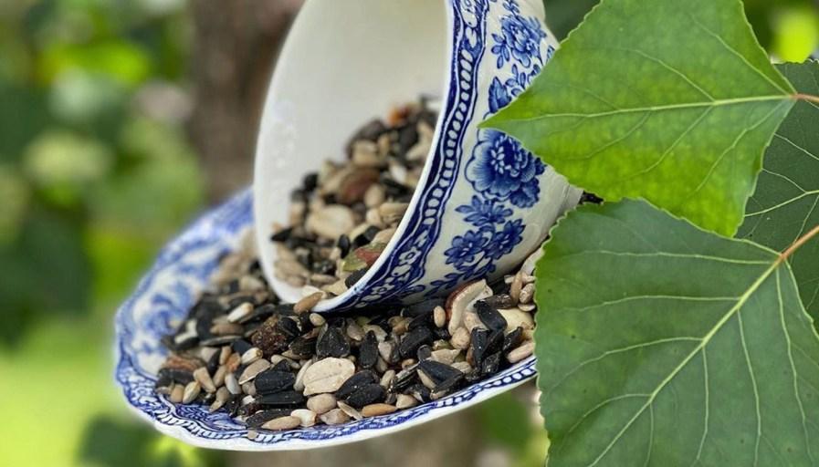 Cup of bird feed
