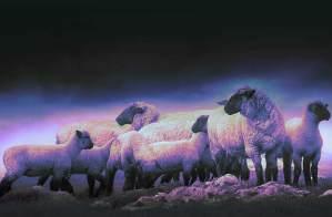 lost-sheep