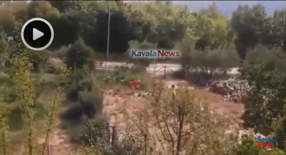 kavala-skylos