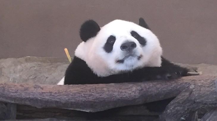 パンダに癒される〜白浜アドベンチャーワールド