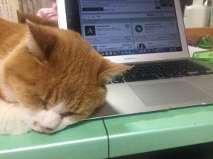 パソコン枕のまろすけ
