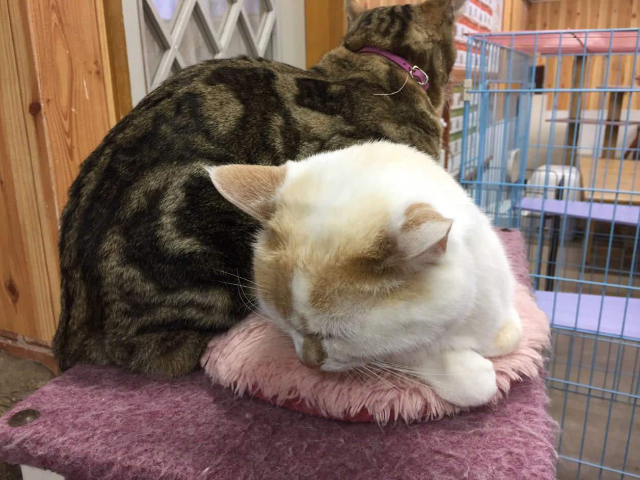 猫が2匹。仲良しです
