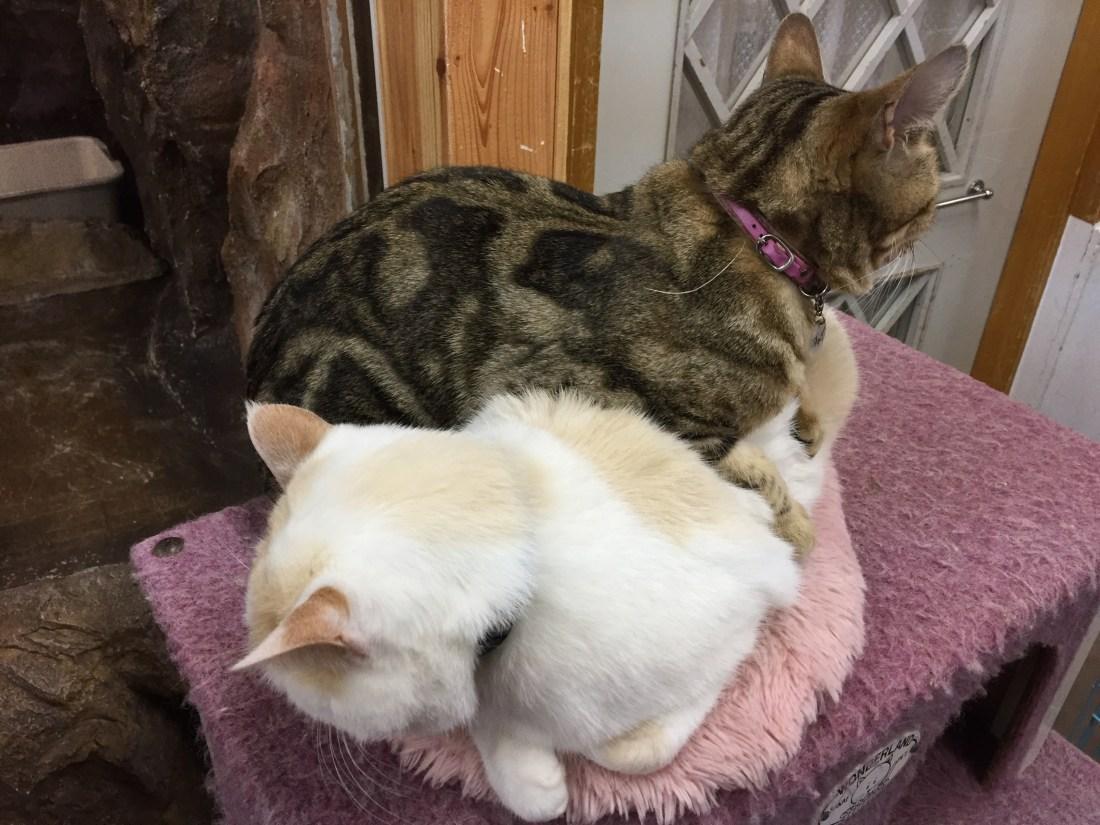 重なる2匹の猫