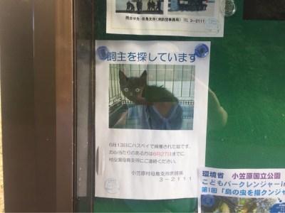 母島迷い猫のポスター
