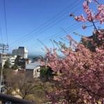 [2020]河津桜まつり*アクセスの良い熱川温泉に泊まろう!