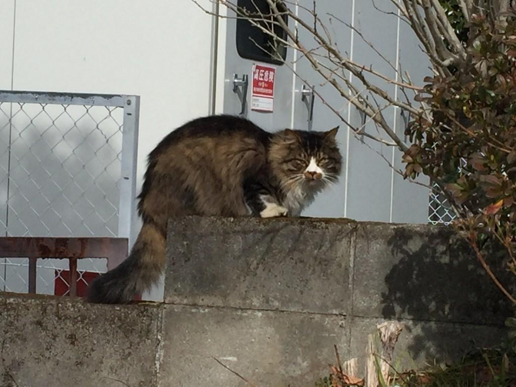 鬼怒川温泉ネコ