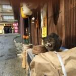 旅先で出会ったネコ in 伊香保温泉⭐️階段あたり