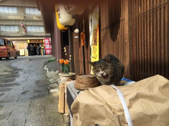 伊香保温泉ネコ