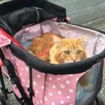 旅先で出会ったネコ in  蒲郡