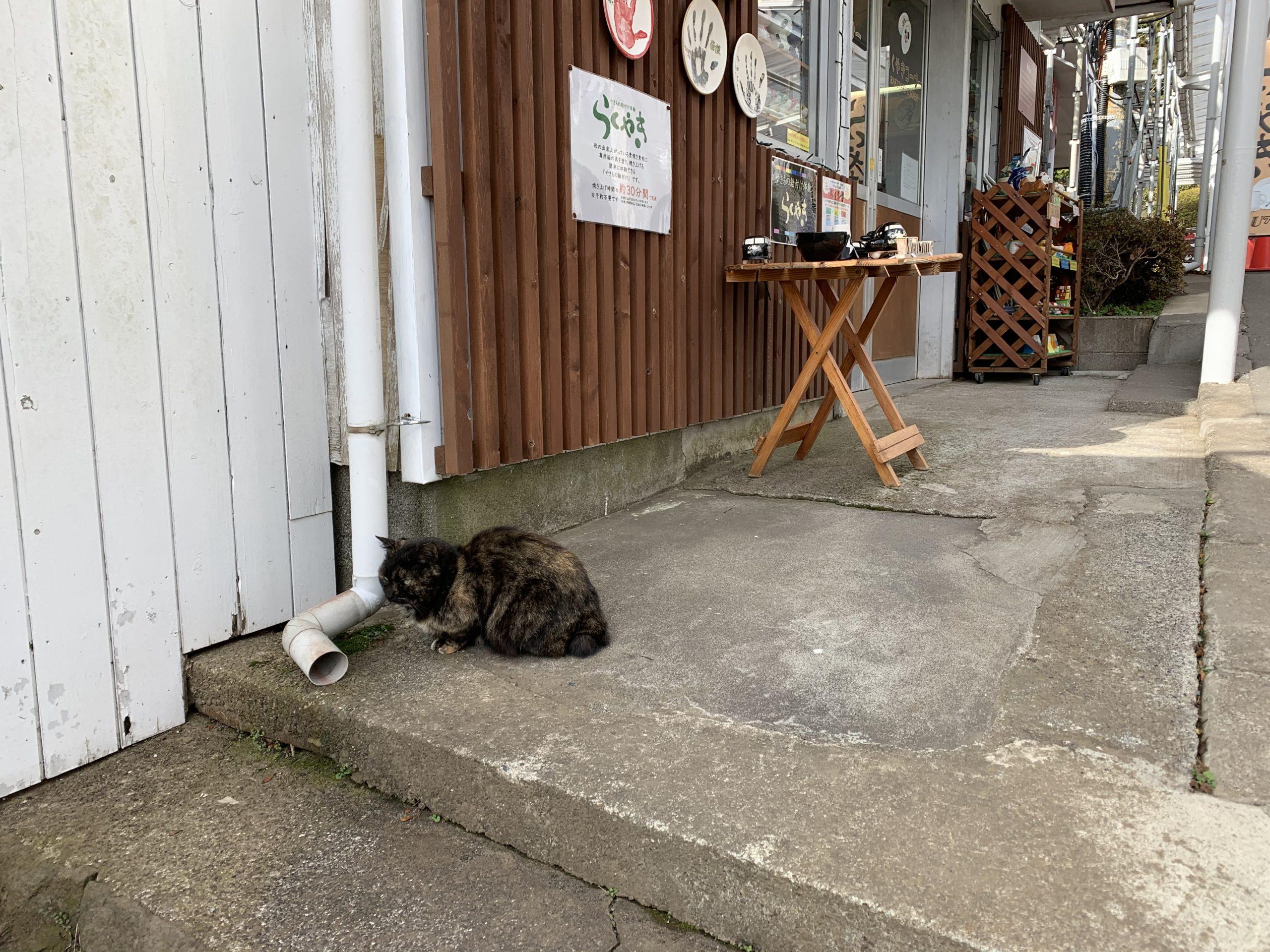 箱根園にいたネコ