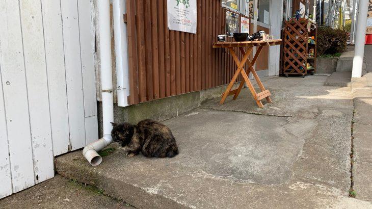 日本のネコ in 箱根園