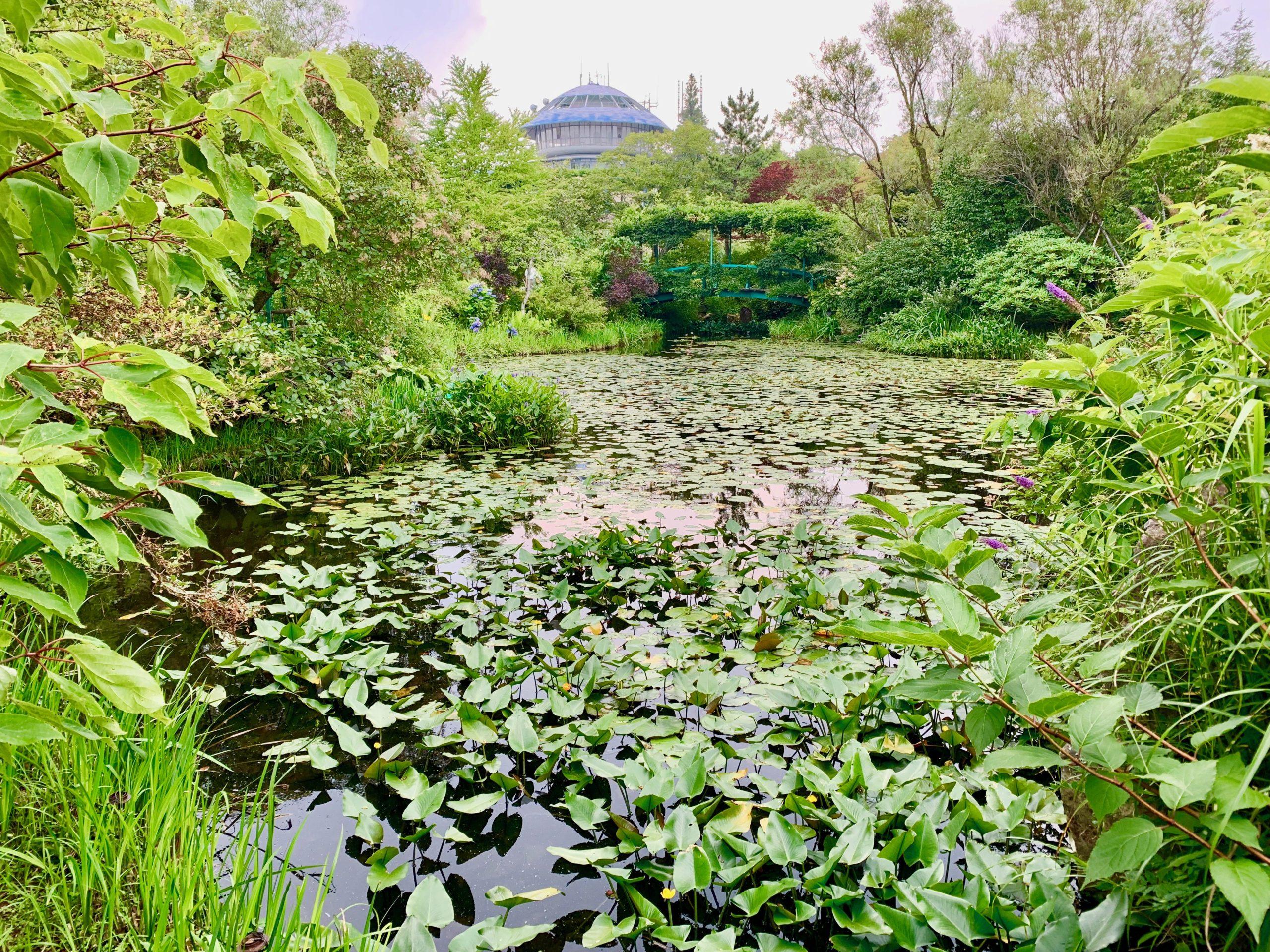 ガーデンミュージアム比叡睡蓮の池