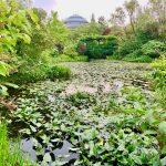 ガーデンミュージアム比叡*絶景とお花畑