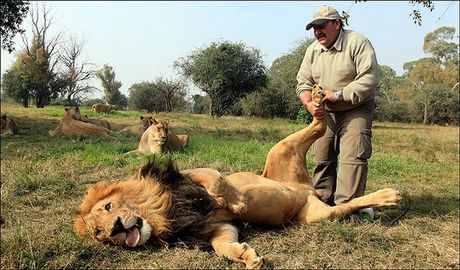 lion030904-5523