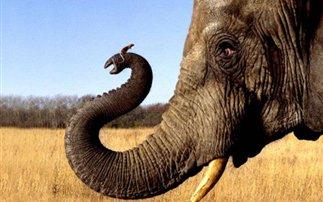 elephants-24348