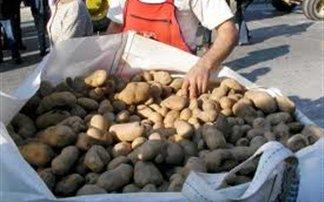 patata-24558