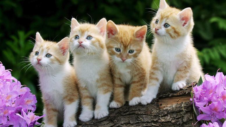 Ραντεβού site αγαπά γάτες