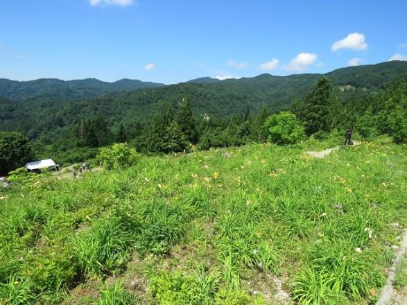 【白山高山植物園(石川県)】:白山に登らなくても高山植物を見ることが出来る場所:6月初旬から7月中旬まで