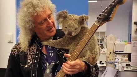 """Brian May, guitarrista de """"Queen"""", tocó para un koala rescatado de los incendios [VIDEO]"""