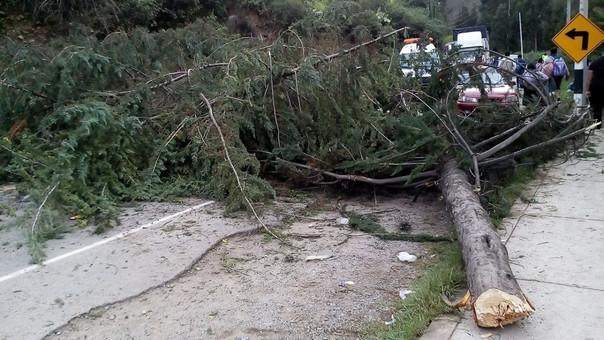 Con troncos bloquean ingreso a la Selva Central.