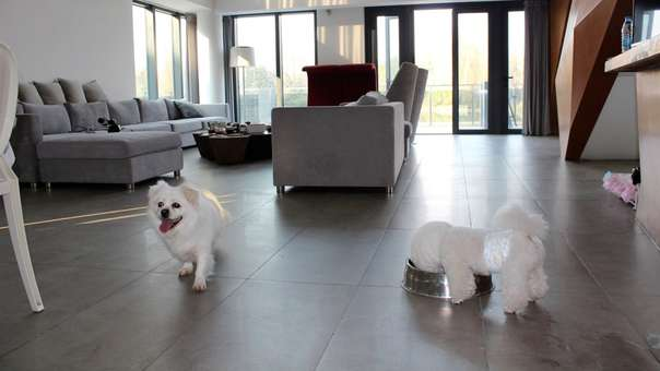 El Tribunal Constitucional dio recomendaciones para la tenencia de mascotas en los edificios de departamentos.
