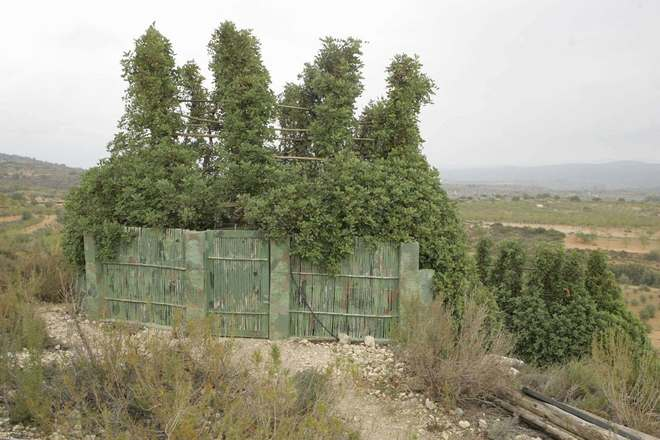 Resultat d'imatges de caza con parany comunidad valenciana