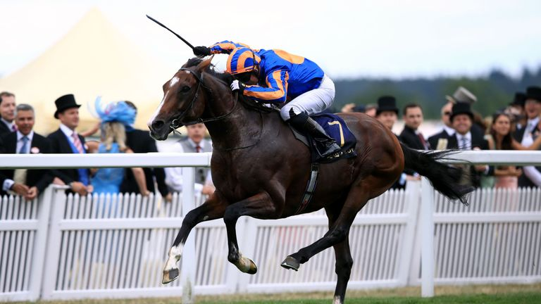 Image result for Idaho ascot