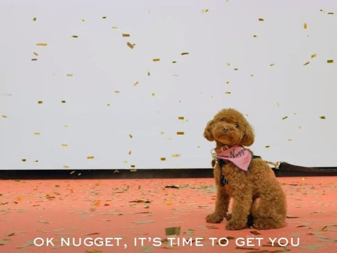 Perry's teacup poodle dog Nugget features in the video advert
