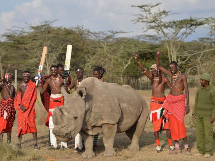 Maasai warriors pose with Sudan, the only male of the last three northern white rhino sub-species on the planet  Eight endangered rhinos die after being taken to new national park in Kenya skynews maasai sudan kenya 4260107