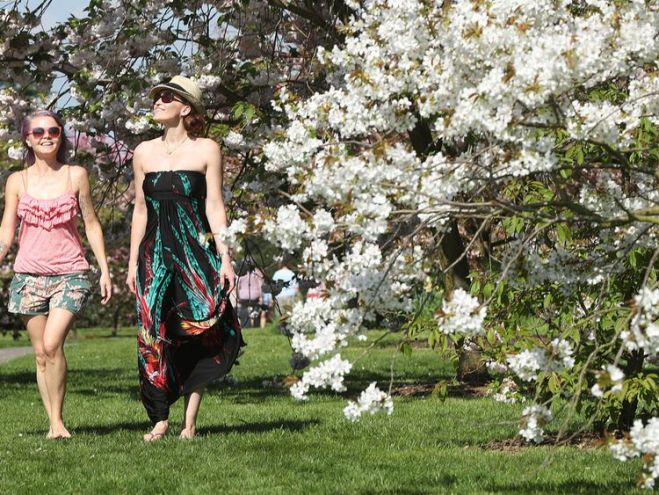 The blossom was well and truly out on the trees at Kew Gardens after a week of hot weather