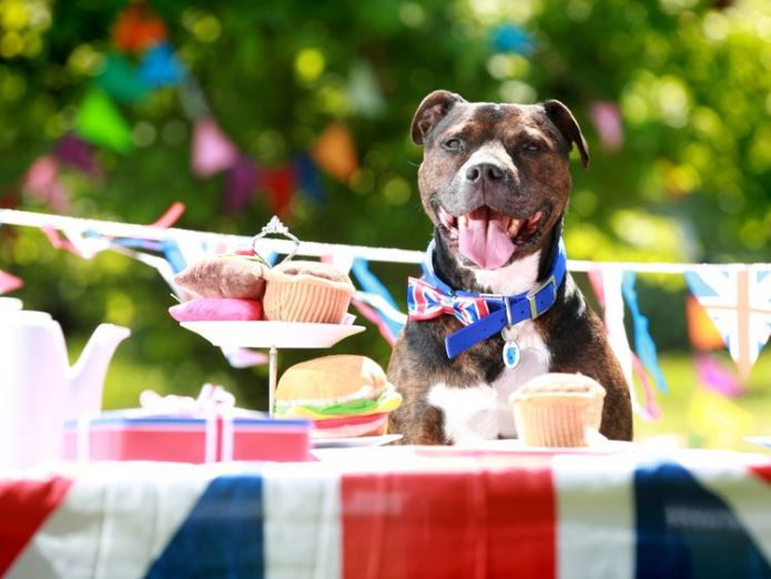 Tyson is looking for a home Whole world (and its dog) celebrates royal wedding Whole world (and its dog) celebrates royal wedding sky news dogs royal wedding 4314922