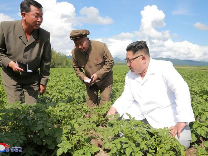 Kim Jong Un knelt on the ground to inspect potato plants in Samjiyon county on the China border  Kim Jong Un snubbed Mike Pompeo for potato farm visit, state media suggests skynews kim jong un north korea 4358472