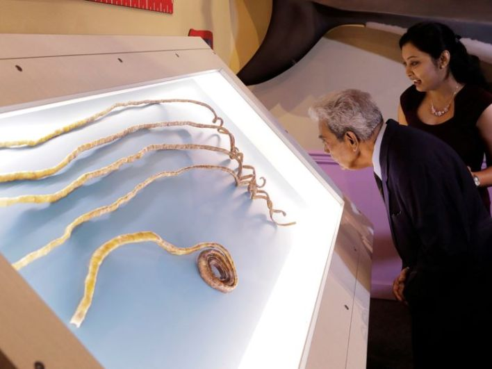 The nails are being displayed at the Ripley's Believe It or Not! museum in New York.