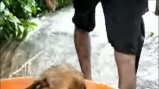 Puppy rescued from flooded dwelling in Kerala  'Rat fever' and malaria kill India flood victims as waters subside skynews kerala puppy floods 4396921
