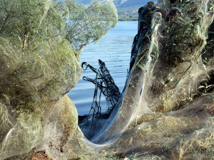 Spider webs have cloaked the riverside area in the western Greek town. Pic: Giannis Giannakopoulos  Blanket of spider webs creates stunning scene in Greek town skynews atioli greece spider webs 4427810