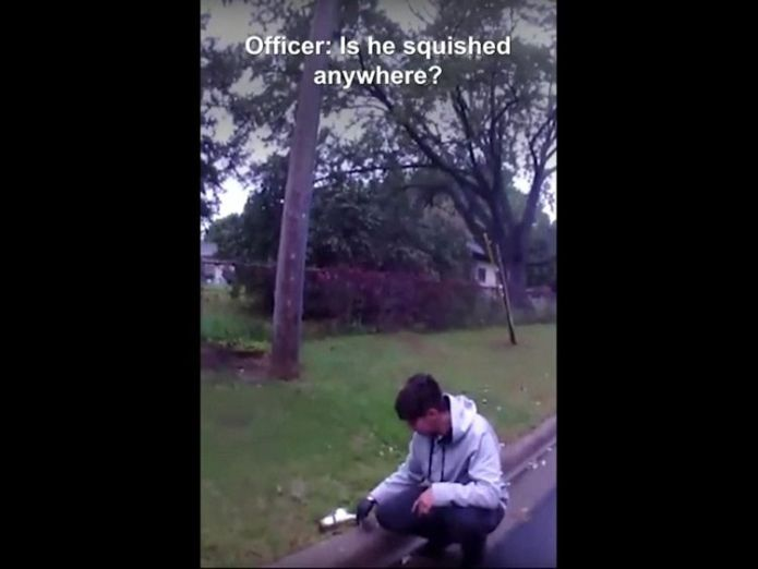 The young man was worried he had killed the animal  Stunned squirrel revived after driver gives CPR skynews minnesota squirrel 4444605