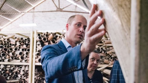 Prince William recently visited an ivory stockpile in Tanzania