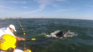 """Sea World Rescuers assisted a humpback whale calf that became tangled in shark netting off the Gold Coast. """"Srcset ="""" https://e3.365dm.com/18/11/320x180/skynews-whale-whale-rescue_4474570.jpg?20181103124228 320w, https://e3.365dm.com/18/11/640x380/skynews-whale-whale-rescue_4474570.jpg?20181103124228 640w, https://e3.365dm.com/18/11/736x414/skynews-whale -whale-rescue_4474570.jpg? 20181103124228 736w, https://e3.35dm.com/18/11/992x558/skynews-whale-whale-rescue_4474570.jpg?20181103124228 992w, https://e3.365dm.com/18 /11/1096x616/skynews-whale-whale-rescue_4474570.jpg?20181103124228 1096w, https://e3.365dm.com/18/11/1600x900/skynews-whale-whale-rescue_4474570.jpg?20181103124228 1600w, https: / /e3.365dm.com/18/11/1920x1080/skynews-whale-whale-rescue_4474570.jpg?20181103124228 1920w, https://e3.365dm.com/18/11/2048x1152/skynews-whale-whale-rescue_4474570. jpg? 20181103124228 2048w """"size ="""" (min-width: 900px) 992px, 100vw"""