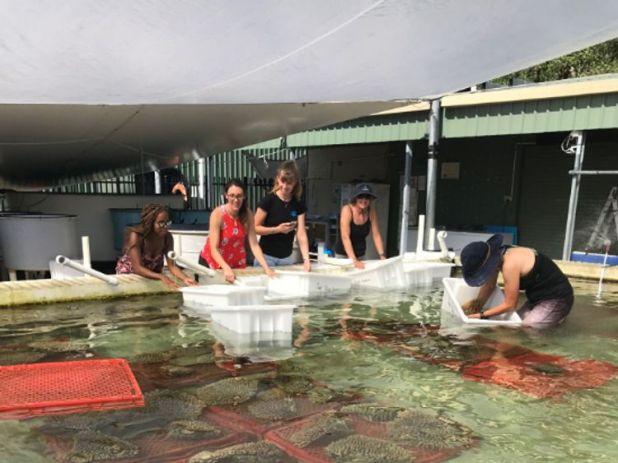 Reseeding the Great Barrier Reef coral. Pic: Biopixel / James Cook University