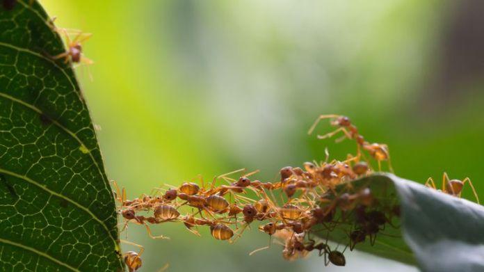 Die Forscher sagen, dass der Verlust von Insekten katastrophal sein könnte.