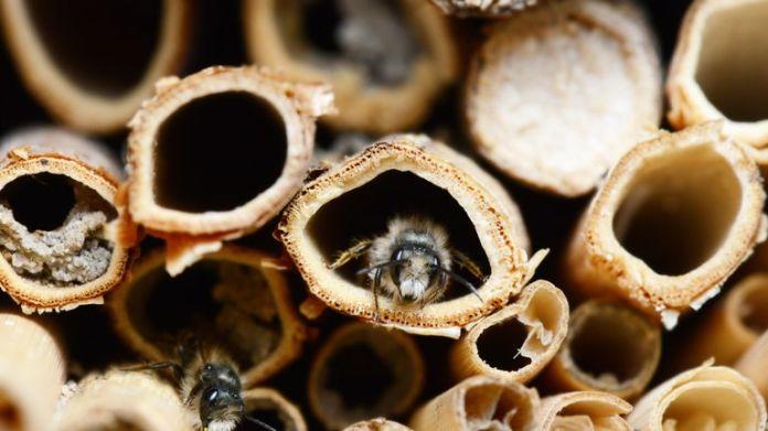 Bienen sind am stärksten von rückläufigen Populationen betroffen