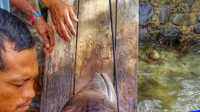 Es wurde festgestellt, dass das Tier Anzeichen von Dehydratation und Hunger zeigte