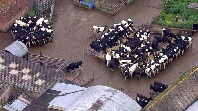 Der Fleischkonsum ist in den letzten 20 Jahren um 3% gesunken, aber wir haben immer noch einen großen Appetit auf Rindfleisch