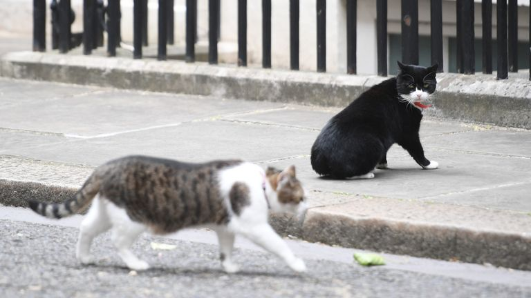 Larry had a feud with Palmerston, the former Foreign Office mouser