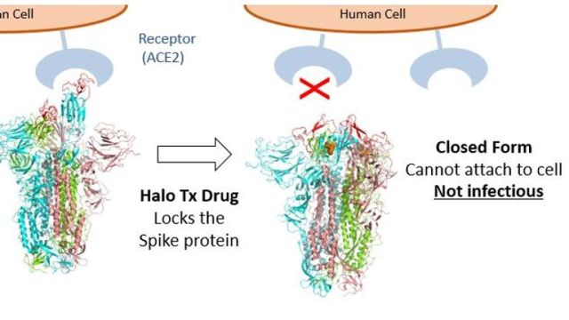 The drug locks the spike protein from attaching to a human cell