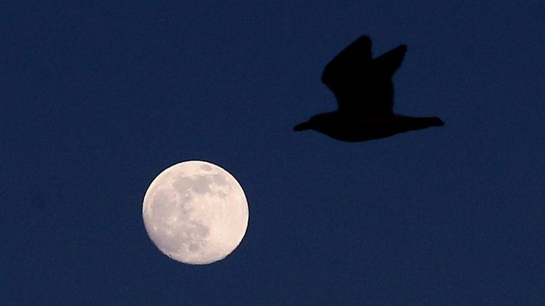 A & # 39; pink supermoon & # 39; will be shown on Tuesday evening