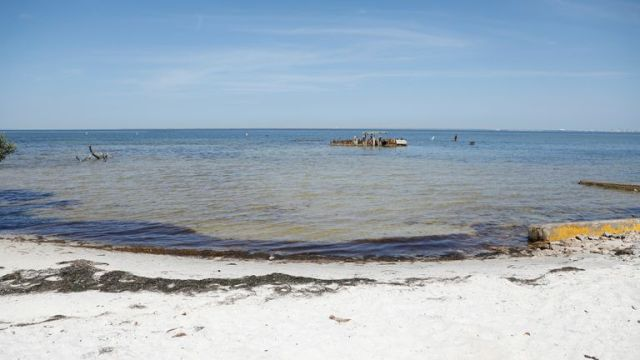 Experts fear the wastewater could spawn algal blooms toxic to marine life in the Tampa Bay estuary