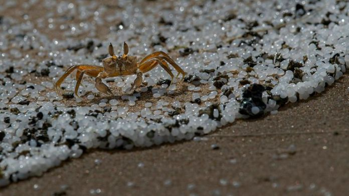 A crab roams on a beach polluted with polythene pellets that washed ashore from burning ship MV X-Press Pearl anchored off Colombo port at Kapungoda, out skirts of Colombo, Sri Lanka, Monday, May 31, 2021. Pic: AP